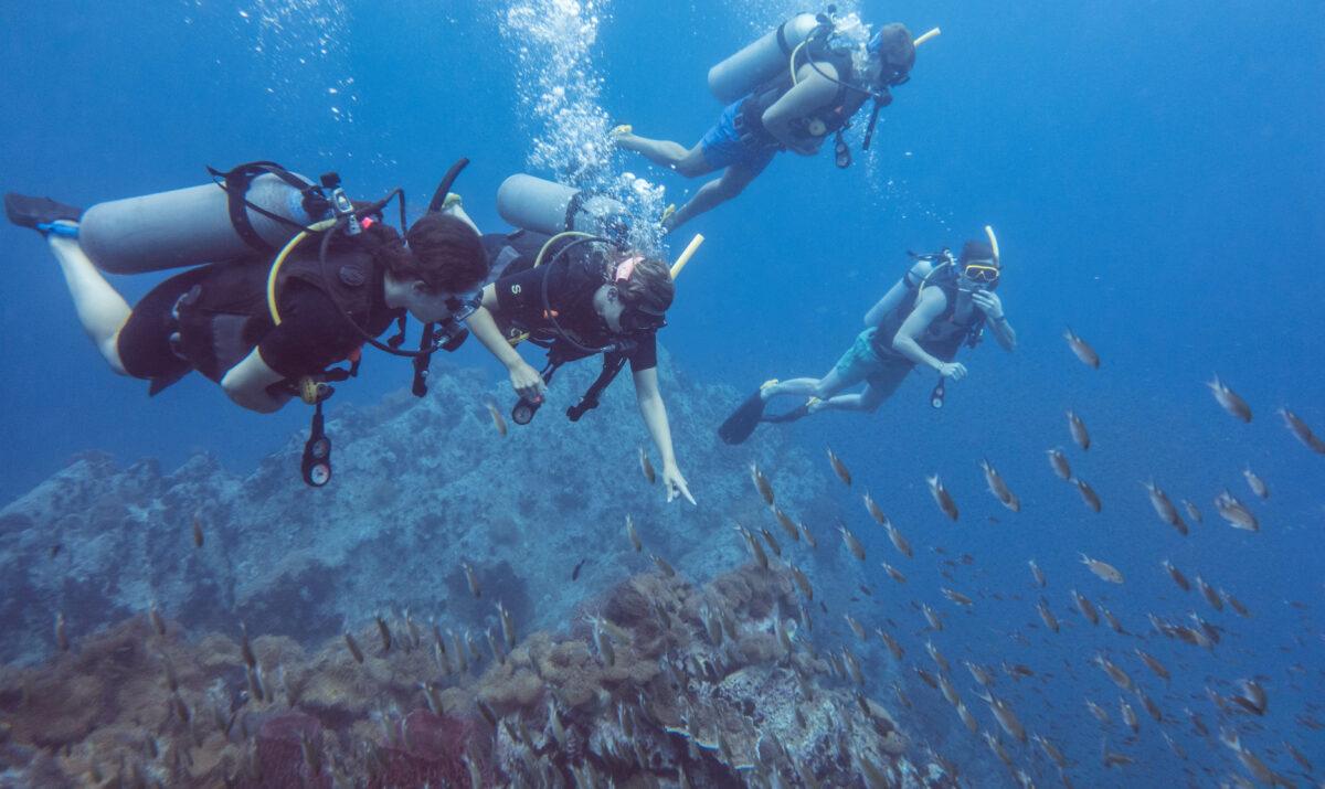 Mijn eerste duikervaring